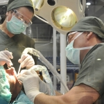 dr-csak-csaba-2008-dental-world5